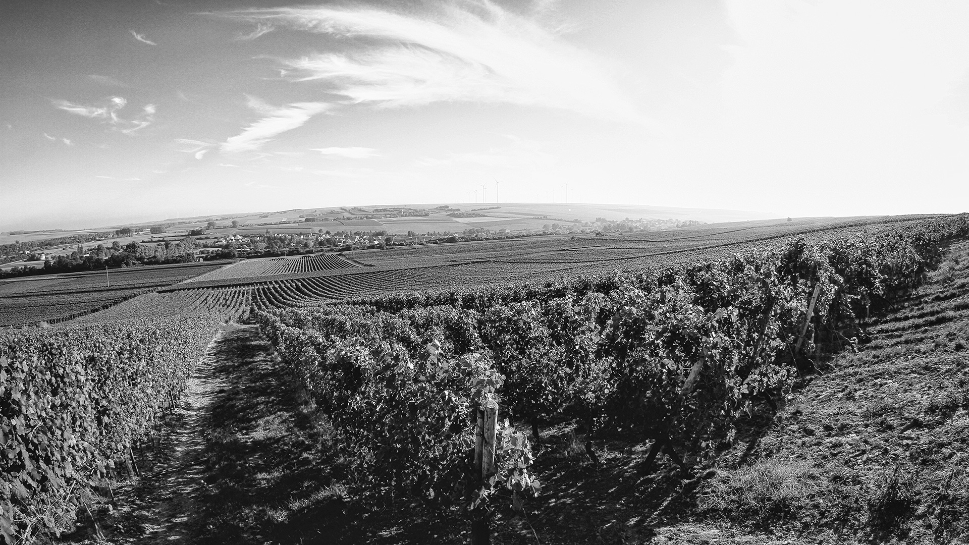 Vineyards in Rheinhessen